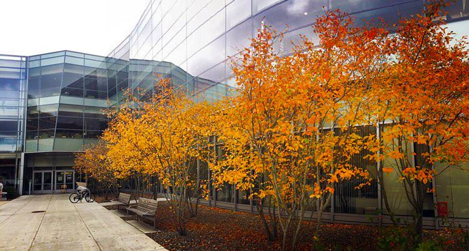 Image of the Berry Library entrance in the fall with colored leaves.